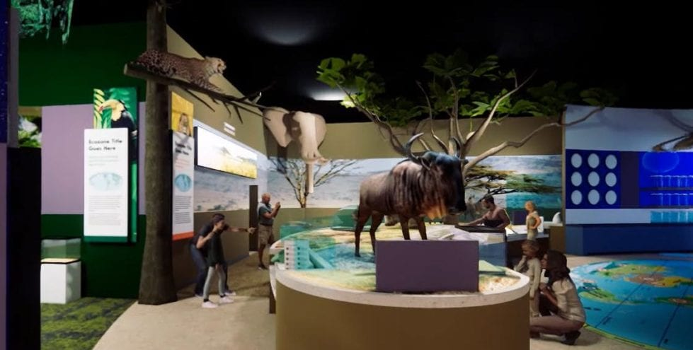Artist's rendering of the new Delaware Museum of Nature and Science's global gallery.