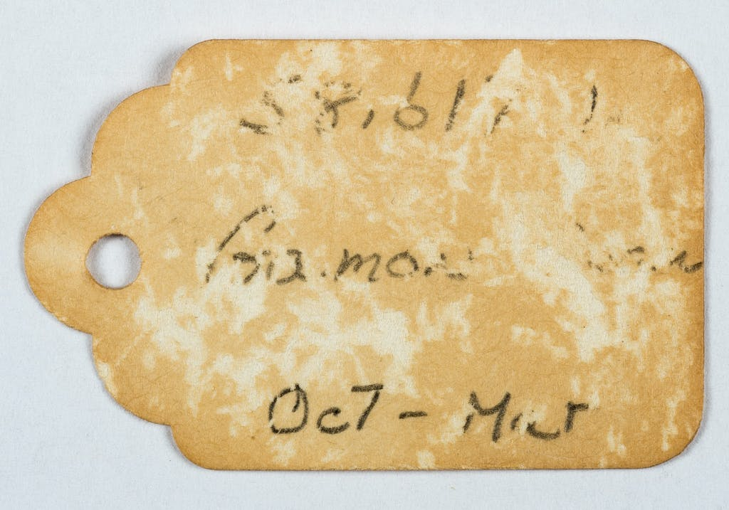 Silverfish have fed across the surface of this label. (Winterthur photo)