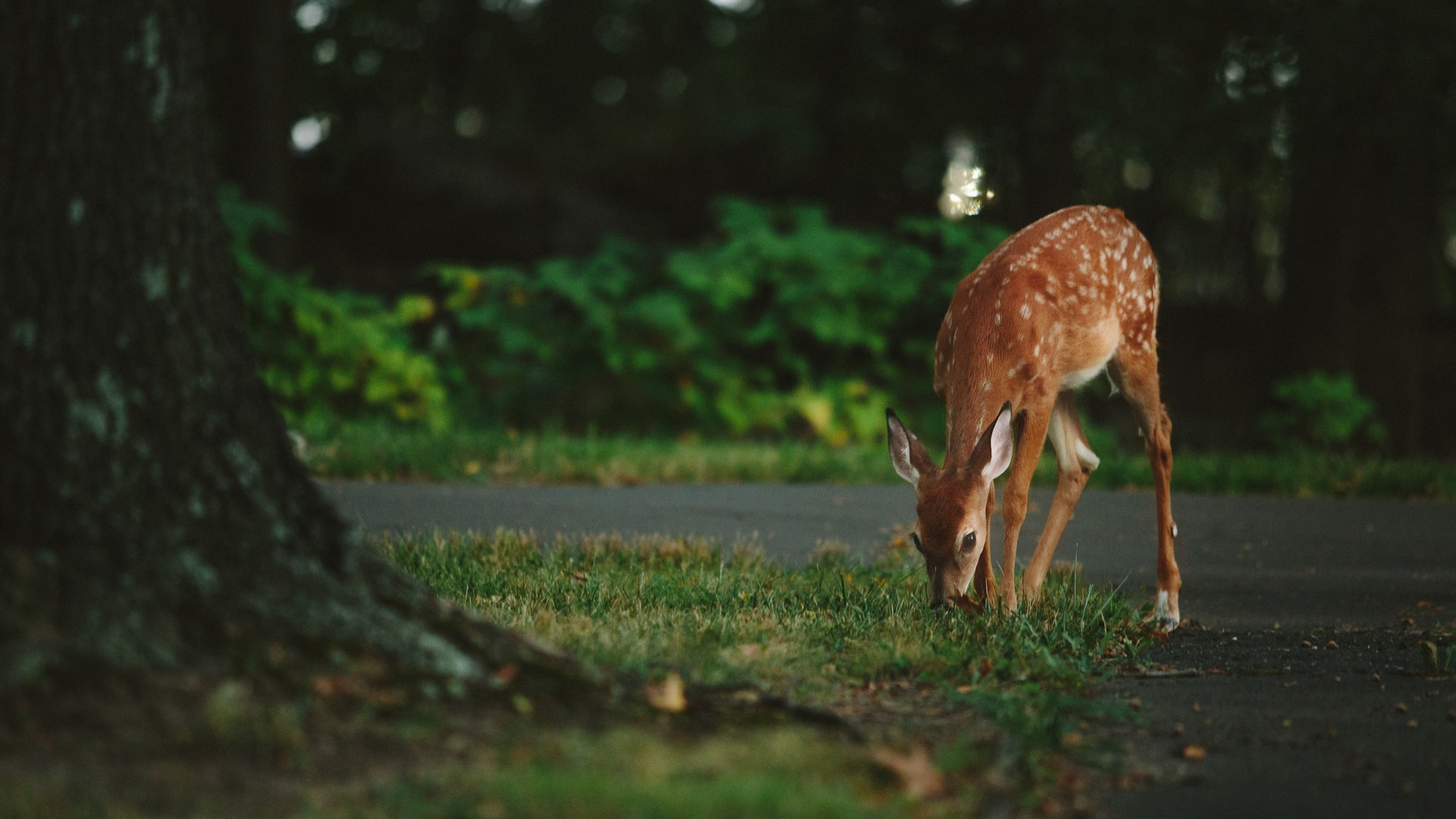 """Featured image for """"Rabid deer found on residential property near Rehoboth Bayside outlets"""""""